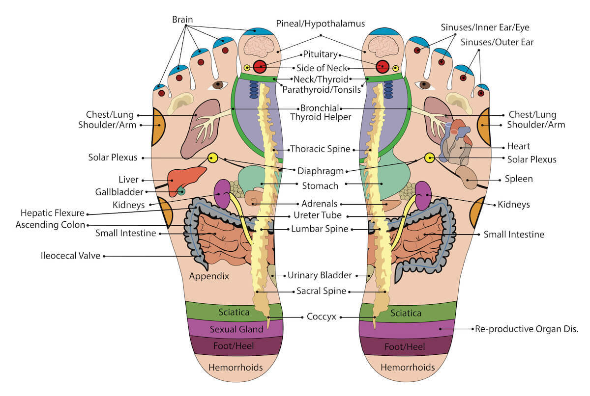 foot reflexology - pressure points map